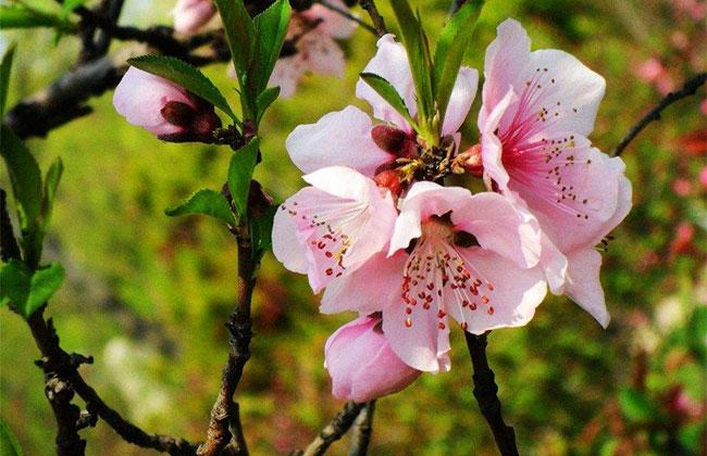 世园会1200多种花卉将绽放北京