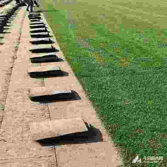 供應江蘇草坪 草坪草價格是多少錢一平方
