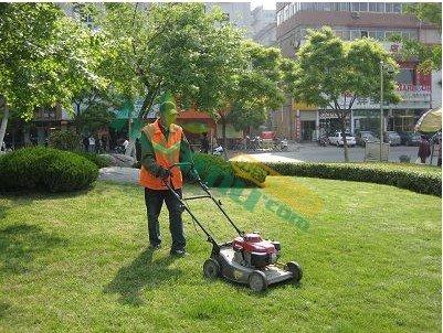供应苏州厂区绿化养护服务
