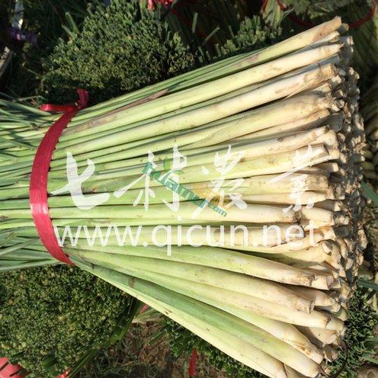 新鲜香茅 fresh lemongrass