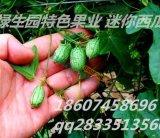 拇指西瓜种子