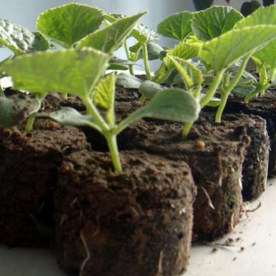 養花高級植料 高檔寵物墊材 園藝蛭石