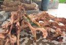 格木 根雕原料