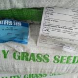蓝标黑麦草绿宝石