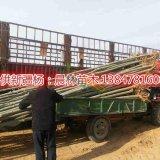 销售新疆杨