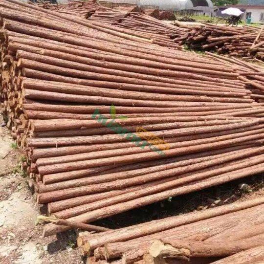 園林園藝綠化河道打樁樹木支撐架支撐 杉木支撐架 防倒桿