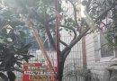一棵珍贵的桔子树盆栽