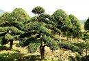 南非进口龟甲龙 块根植物 酷似假山