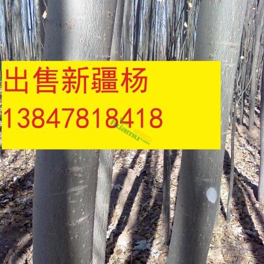 2017年新疆楊