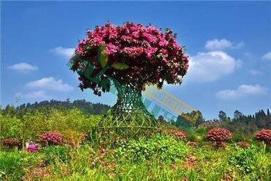 成都精品杜鹃花瓶,高杆杜鹃花,条子