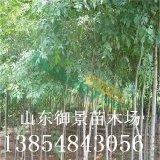 御景苗木场供应3公分白蜡 5公分白蜡价格 白蜡产地