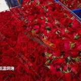 云?#40092;?#29992;玫瑰鲜花墨红