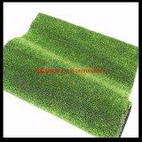 供应多个优质品种草坪