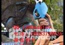 园林剪枝钳 专用果树修枝 树农的认可产品