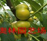 黄金油蟠桃