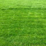 绿化地草坪