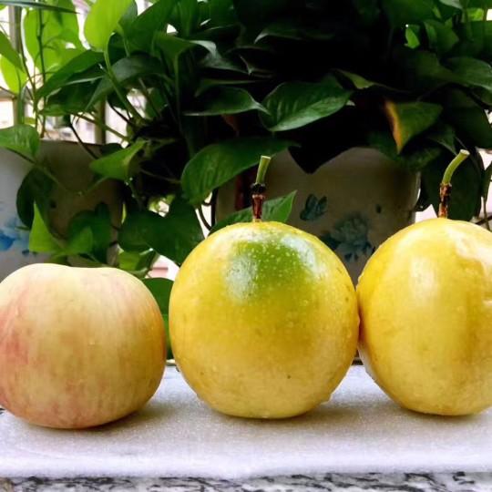 黃金百香果