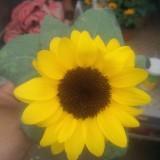观赏向日葵
