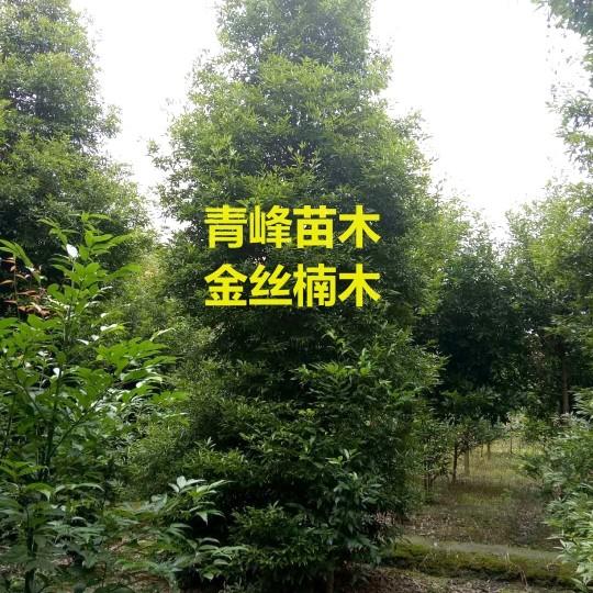 成都金丝楠木大量批发出售