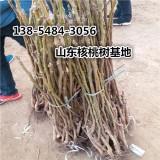基地核桃树价格2公分-8公分核桃树价格