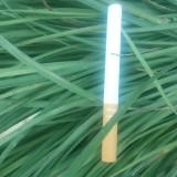 细叶麦冬草价格 产地 山东细叶麦冬草苗木基地