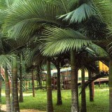 假槟榔大量供应13599656861