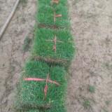 南宁马尼拉草皮