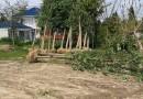 供应1-15公分优质银杏树苗