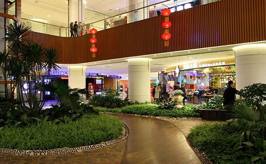 提供深圳植物租赁、深圳商场绿植租赁、深圳绿化养护