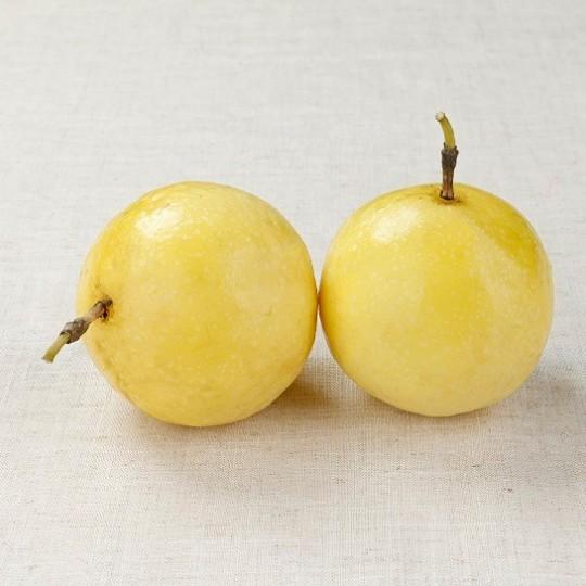 黃金百香果苗 黃金百香果嫁接苗 黃金百香果無毒苗