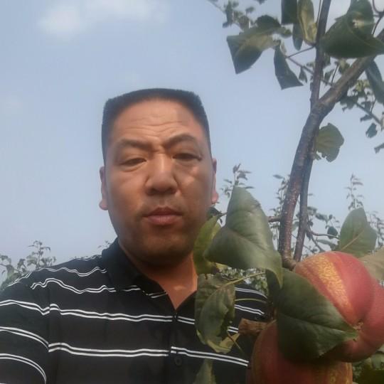 3米高早酥红梨苗 早酥红梨多少钱一棵
