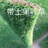 精品果岭草草坪
