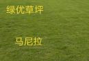 浙江马尼拉草坪价格