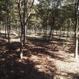 胸径3-18公分分枝点1.7-2.8米榉树基地批发 江苏榉树报价