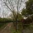 10-25公分重阳木
