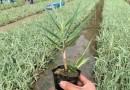 水生植物批发