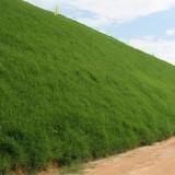草坪种子多年生