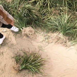 麦冬王坤种植基地