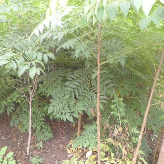 暴利的灰色产业树