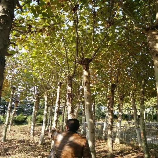 江苏棋牌德州扑克室树