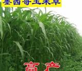 直销牧草种子花卉种子