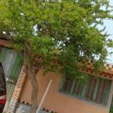 30年大石榴树