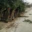 江苏常年供应棕榈树