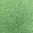 江苏常年供应马尼拉草坪