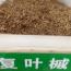 供应复叶槭种子