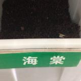 八棱海棠种子