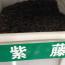 紫藤种子直销