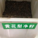 长期批发海南黄花梨种子