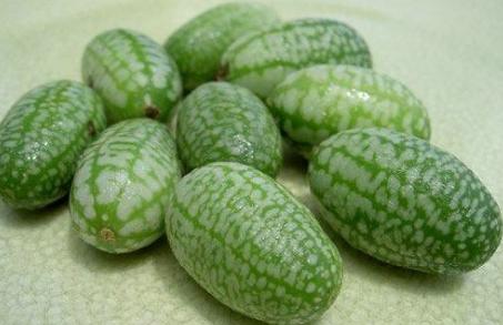 拇指西瓜種子供應