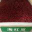 红豆树种子批发